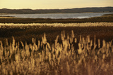 Prairie Grass Leads into the Shores of Ogallala Aquifer
