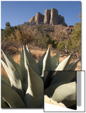A Century Plant  Agave Harvardiana  and Casa Grande Rock Formation in Big Bend National Park