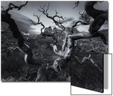 A Patagonia Scenic of the Andes Mountains  Weathered Dead Tree Branches  and Dramatic Clouds