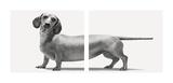 Heads and Tails Reproduction d'art par Jon Bertelli