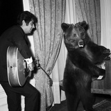 Singer Enrico Macias Playing the Guitar While a Bear Is Playing the Piano  9 May 1967