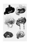 Woman's Fashion in 1822  France : Different Sorts of Hats
