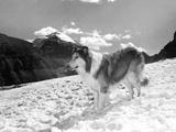 Serie Televisee Lassie 1954-74