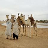 Men and Camels with Saddles  Algerian Desert