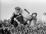 Pierre Tchernia During Grape-Harvest in Libourne  France  September 1986