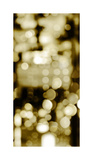 Golden Reflections Triptych II