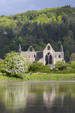 Ruins of Tintern Abbey by the River Wye  Tintern  Wye Valley  Monmouthshire  Wales  United Kingdom