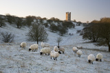 Broadway Tower and Sheep in Morning Frost  Broadway  Cotswolds  Worcestershire  England  UK
