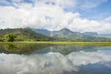 Hanalei National Wildlife Refuge  Hanalei Valley  Kauai  Hawaii  United States of America  Pacific