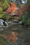 Japanese Bridge in Momijidani Park (Japanese Maple Park) in Autumn