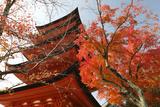 Five-Storey Pagoda (Gojunoto) in Autumn  Miyajima Island  Western Honshu  Japan