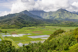 Taro Fields in Hanalei National Wildlife Refuge