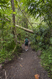Hiking Manoa Falls Trail  Honolulu  Oahu  Hawaii  United States of America  Pacific