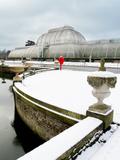 Palm House in Kew Gardens in Winter