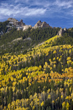 Yellow and Orange Aspens with Evergreens in the Fall