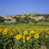 Hilltop Village Above Sunflower Field  Pals  Catalunya (Costa Brava)  Spain