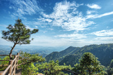 Pine Tree and Green Mountains at Tian Mu Shan Four Sides Peak  Zhejiang  China