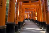 Senbon Torii (1 000 Torii Gates)  Fushimi Inari Taisha Shrine  Kyoto  Japan