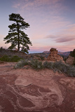 Pine Tree and Sandstone at Dawn with Pink Clouds