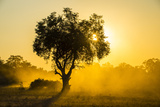 Dust in Backlight at Sunset  South Luangwa National Park  Zambia  Africa