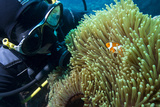 Scuba Diver with False Clown Anenomefish  Magnificent Sea Anemone  Cairns  Queensland  Australia