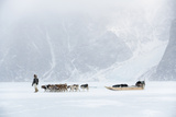Inuit Hunter Walking His Dog Team on the Sea Ice in a Snow Storm  Greenland  Denmark  Polar Regions