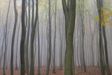 Forest in Fog  Near Frankfurt  Germany  Europe