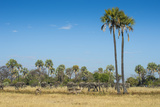 Waterbucks (Kobus Ellipsiprymnus) in Front of African Bush Elephants (Loxodonta Africana)
