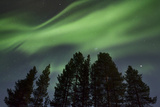 Amazing Northern Lights (Aurora Borealis) Display over Pine Trees in Night Skies  Kiruna  Sweden