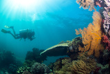 Scuba Diver Swimming with Gopro in Coral Landscape Scenic at Thetford Reef