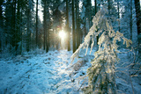 The Sun Finding a Small Opening in the Snowy Forest of Koenigstuhl