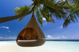 Sofa Hanging on a Tree on the Beach  Maldives  Indian Ocean