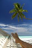 Hammock and Palm Tree  Maldives  Indian Ocean