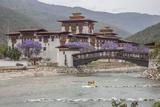 Rafting in the River Mo Chhu Flowing Near the Punakha Dzong Where Bloom the Jacaranda Trees  Bhutan