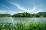Green Landscape with Lake and Lush Hills in Hangzhou  Zhejiang  China