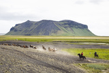 Wild Horses Running  South Iceland  Iceland  Polar Regions