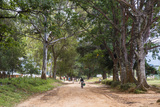 Tree Alley in Livingstonia  Malawi  Africa
