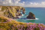 Pink Thrift Flowers  Bedruthan Steps  Newquay  Cornwall  England  United Kingdom