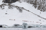 Lindblad Expeditions Guests from the National Geographic Explorer at Brown Bluff
