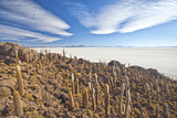 An Amazing View from the Top of the Isla Incahuasi  Salar De Uyuni  Bolivia  South America