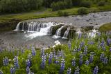 River and Waterfall in Hveragerdi  Reykjanes Peninsula  Iceland  Polar Regions