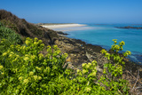 Blooming Flowers with Shell Beach in the Background  Herm  Channel Islands  United Kingdom