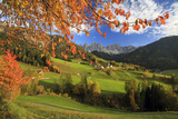 The Autumn Colors of a Tree Overlooking Val Di Funes and St Magdalena Village