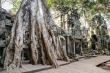 Ruins of the Ta Prohm Temple  Angkor  UNESCO World Heritage Site  Cambodia  Indochina