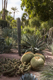 Cacti  Jardin Majorelle  Owned by Yves St Laurent  Marrakech  Morocco  North Africa  Africa