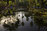 Reflections in Lily Pool  Jardin Majorelle  Owned by Yves St Laurent  Marrakech  Morocco