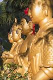 Statues at Ten Thousand Buddhas Monastery  Shatin  New Territories  Hong Kong  China  Asia
