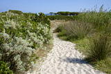 Sandy Path to the Beach  Scrub Plants and Pine Trees in the Background  Costa Degli Oleandri