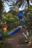 Jardin Majorelle  Owned by Yves St Laurent  Marrakech  Morocco  North Africa  Africa