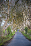 The Dark Hedges in Northern Ireland  Beech Tree Avenue  Northern Ireland  United Kingdom